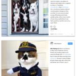 Instagram Influencer Posts